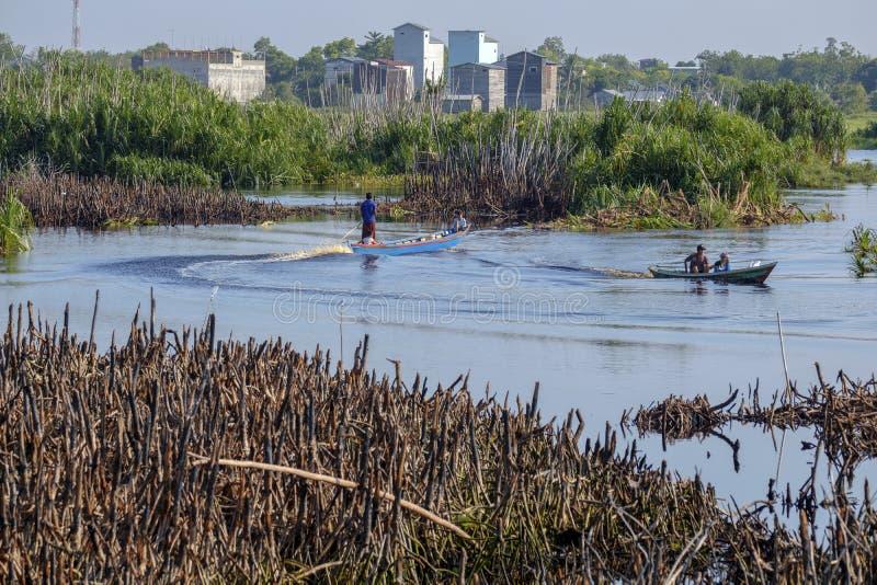 Черная вода в реке Sebangau стоковая фотография