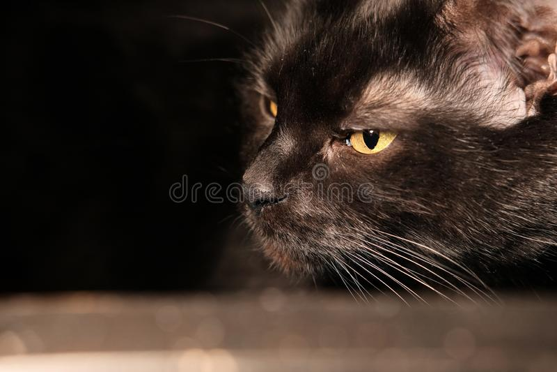 Черный грустный кот лежа на стеклянном столе Реальное домашнее фото стоковое изображение