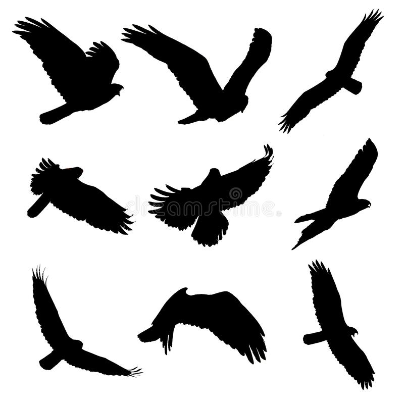Черный силуэт летящие птицы на белой предпосылке Канюк стоковая фотография