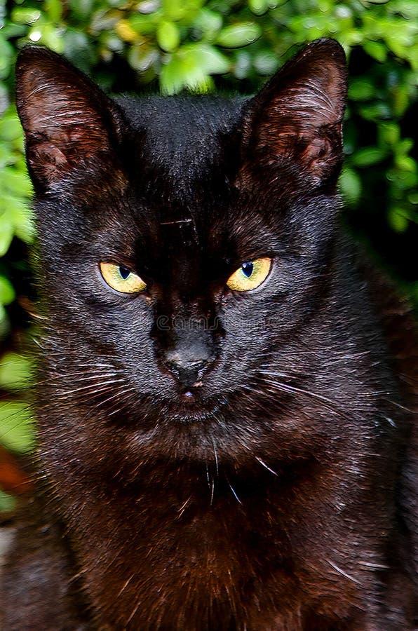 ЧЕРНЫЙ CAT в моем саде стоковые фотографии rf