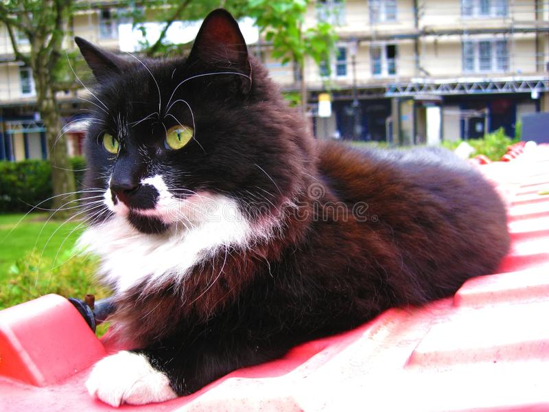 Черно-белый кот с желтыми глазами ослабляя на красном ящике в рынке Portobello в Notting Hill стоковая фотография rf