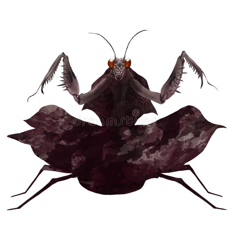 Чертеж цифров/иллюстрация большого коричневого богомола готового для того чтобы атаковать в изолированную белую предпосылку стоковые изображения rf