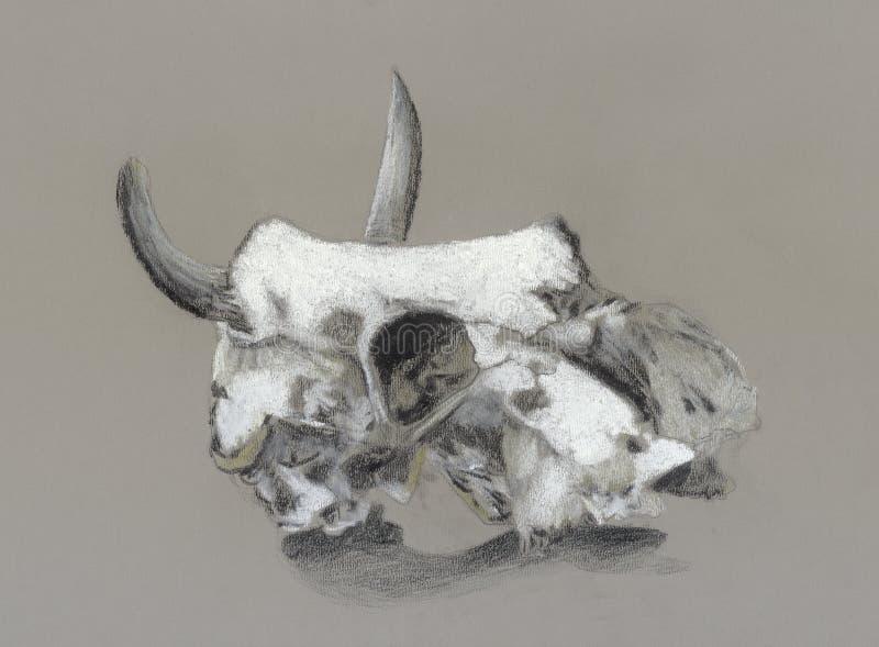 Чертеж черепа скотин на серой предпосылке стоковое фото