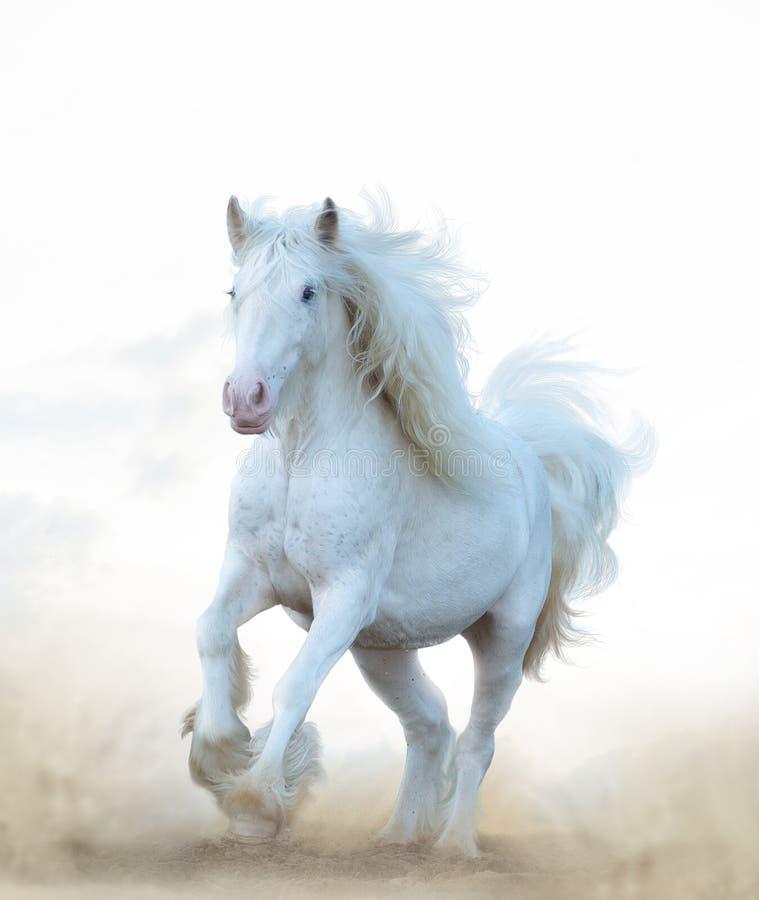 Ход белой лошади снега стоковое фото