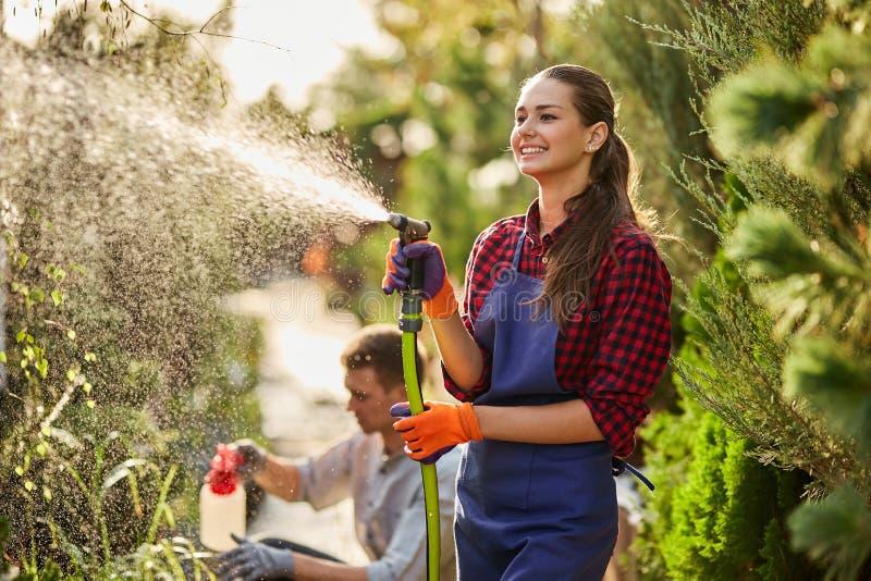 работа сада Усмехаясь садовник девушки распыляет воду и парень распыляет удобрение на заводах в красивом питомнике стоковые изображения
