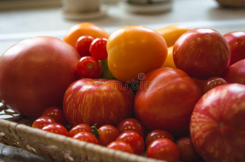 Различные свежо скомплектованные органические томаты от сада стоковые изображения rf