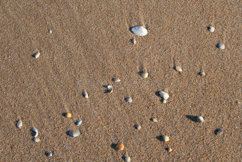 Различные раковины на песчаном пляже стоковое фото