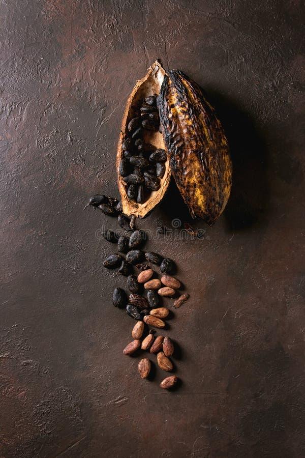 Разнообразие бобов кака стоковая фотография rf