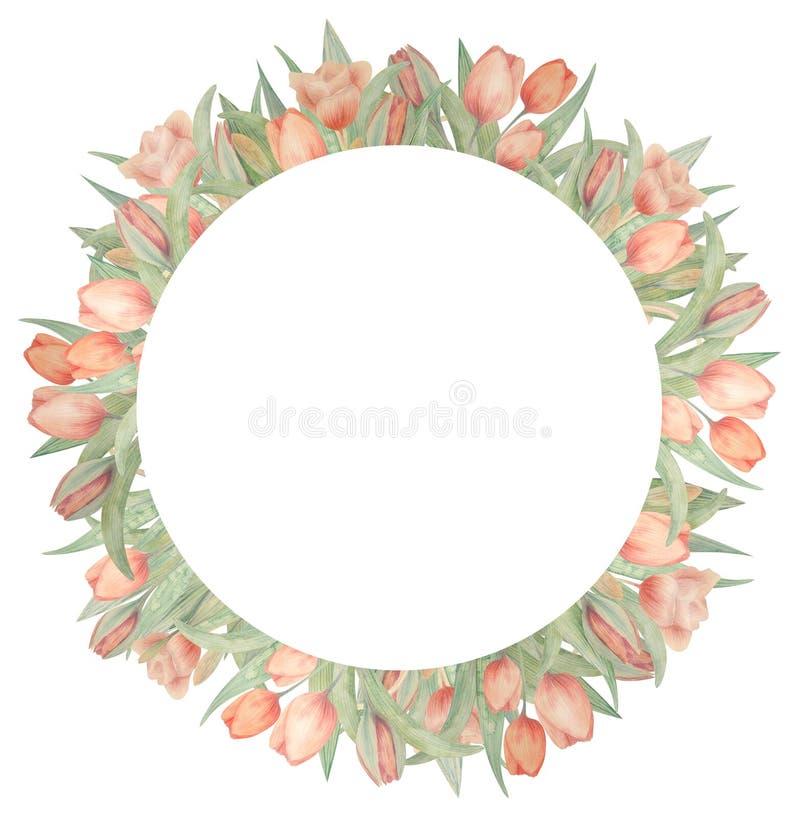 Рамка акварели с тюльпанами Нарисовано вручную Идеал для логотипа, приглашений свадьбы, карт, плакатов стоковые фотографии rf