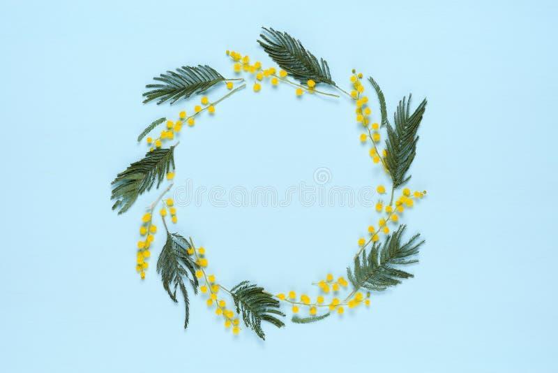 Рамка круга с цветками мимозы стоковая фотография