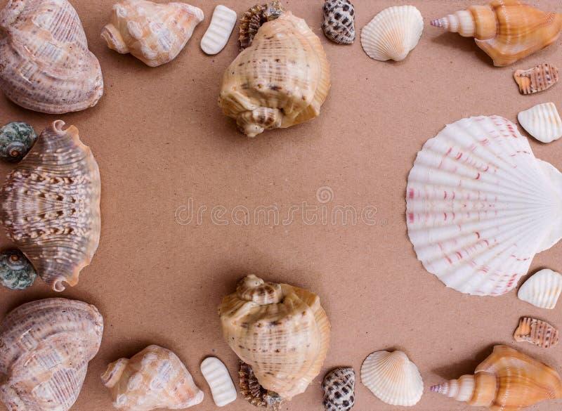 Рамка шаблона подарков от моря стоковые изображения rf