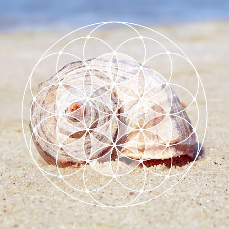 Расположение и seashell Фибоначчи спиральное стоковое фото rf