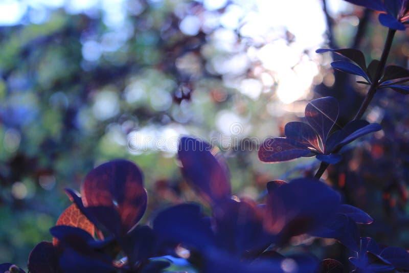 растения royalty free stock images