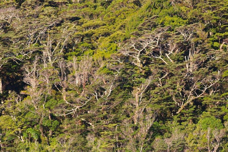 Растительность вдоль сомнительного звука, национальный парк Fiordland, Новая Зеландия стоковые изображения rf
