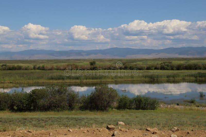 Река Barguzin в июле стоковые фото