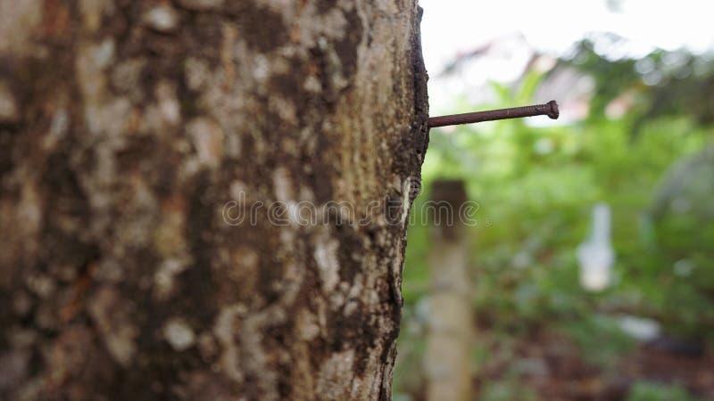 Ржавый ноготь на стержне дерева стоковые фотографии rf
