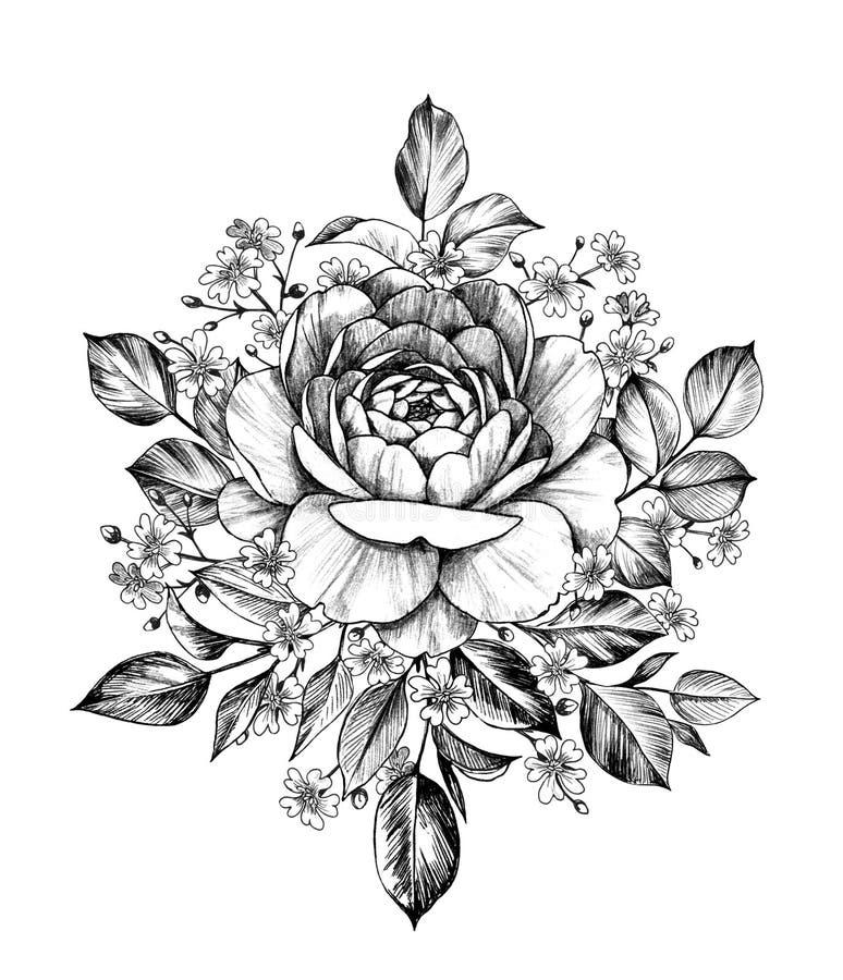 Рука вычерченное Роза с гипсофилой иллюстрация вектора