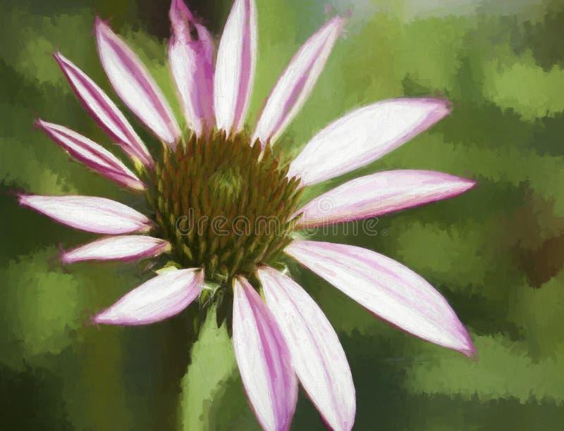 Розовый крупный план покрашенное цифров цветения Coneflower эхинацеи иллюстрация штока