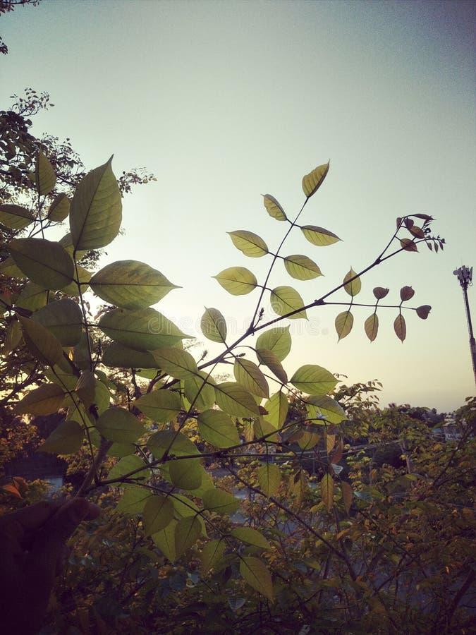 Рост лист во дни стоковое фото