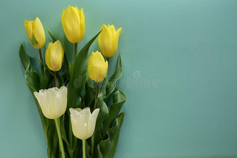 Żółci i biali tulipany na lekkim turkusowym tle zdjęcie royalty free