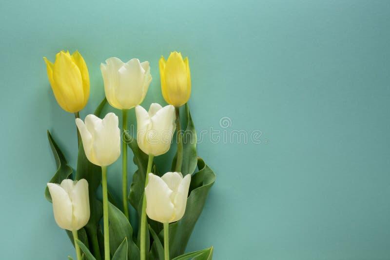 Żółci i biali tulipany na lekkim turkusowym tle zdjęcie stock