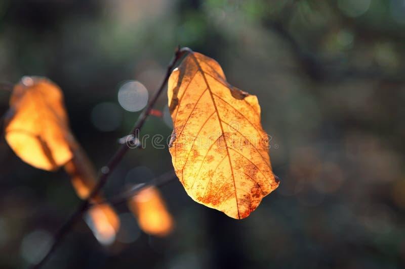 Żółci jesień liście obraz stock