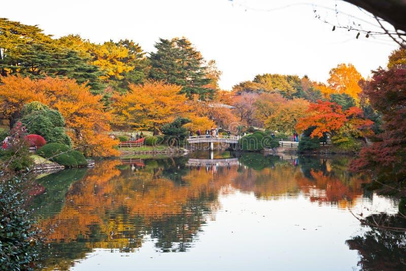 Żółci jesień liście, spadku koloru drzewa fotografia royalty free