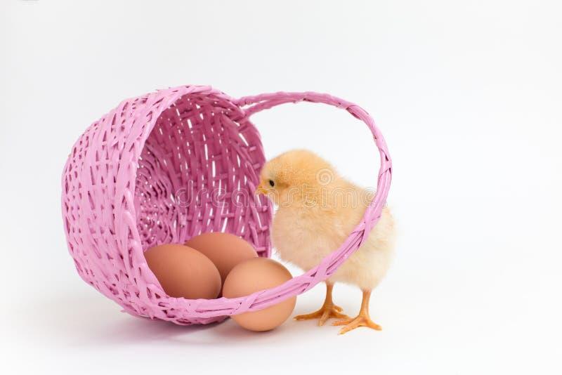 Żółci kurczątek spojrzenia w Wielkanocnego kosz z brown jajkami zdjęcia royalty free