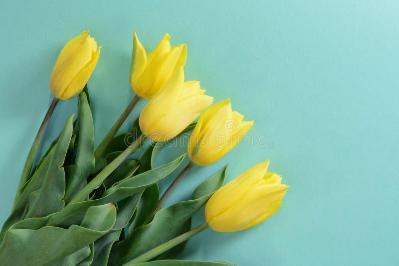 Żółci tulipany na lekkim turkusowym tle obraz stock