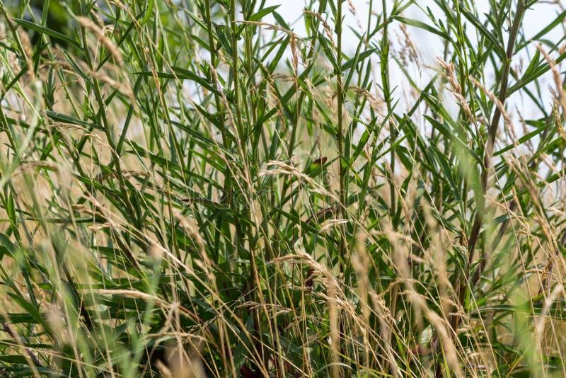 Żółta łąka przy zbliżeniem fotografia royalty free