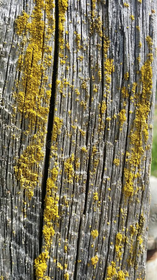 Żółta foremka obraz stock