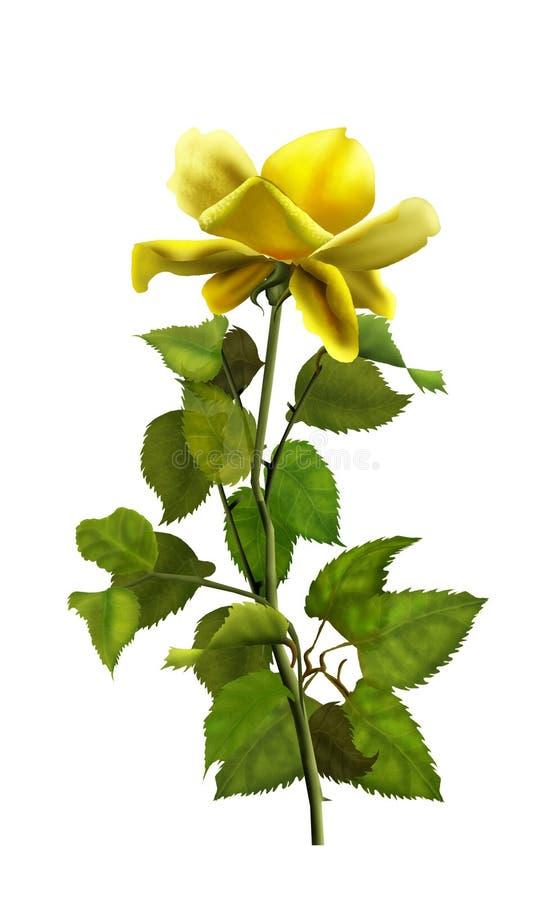 Żółta róża royalty ilustracja