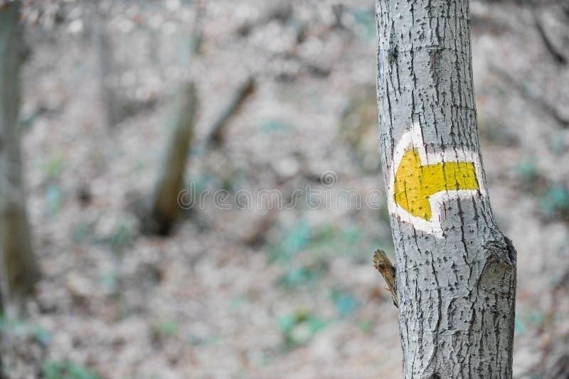 Żółta strzała wycieczkuje znaka na drzewie zdjęcia stock