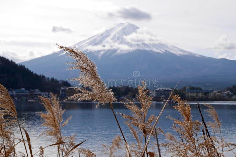 Żółta trawa jeziorem z widokiem góra Fuji zdjęcia royalty free