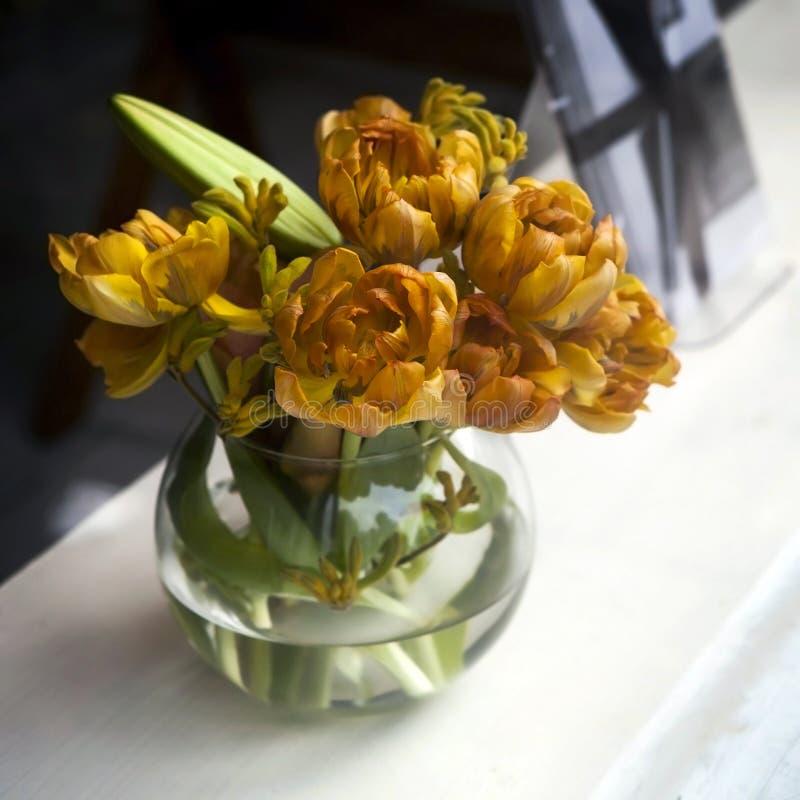 Żółta Tulipa żyła złota zdjęcie royalty free