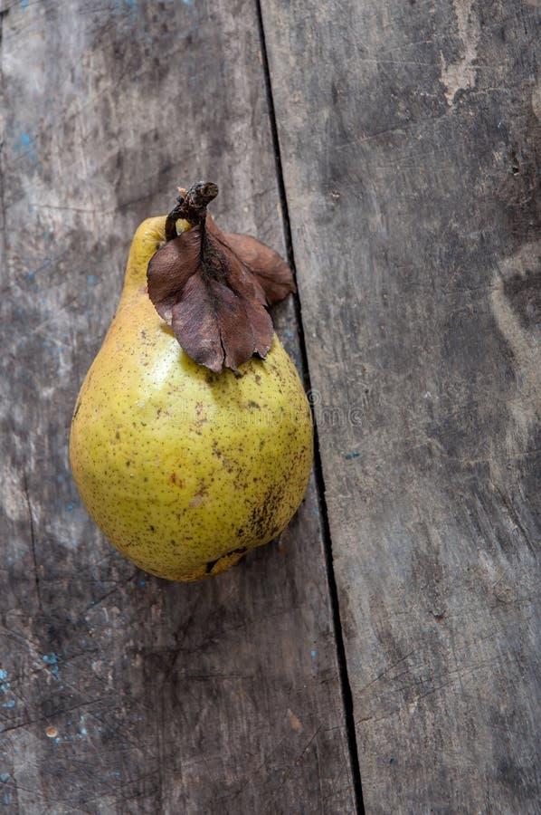 Żółte bonkrety zdjęcia stock