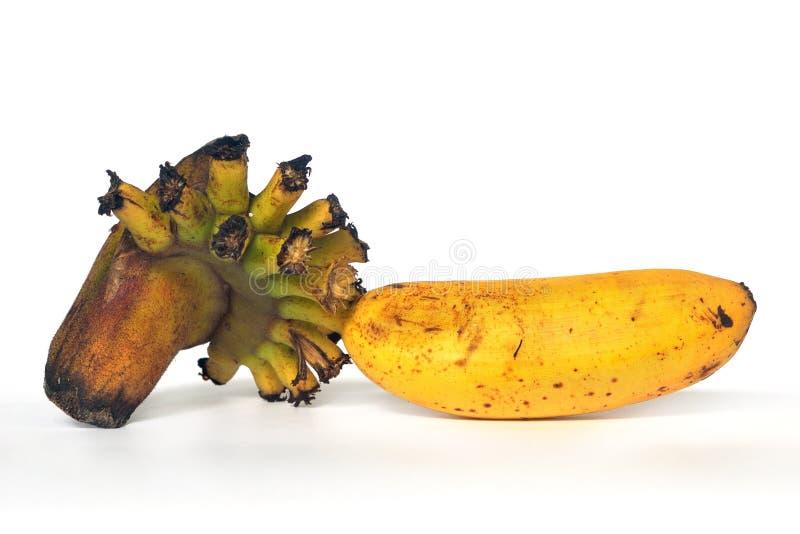 Żółty banan obrazy stock