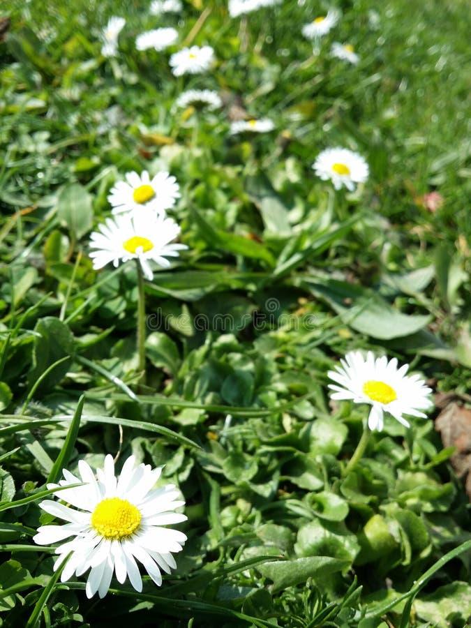 Żółty biały kwiat obraz royalty free
