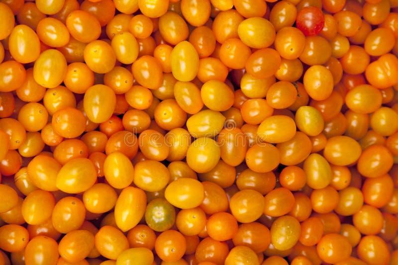 Żółty Cerry pomidor obraz royalty free