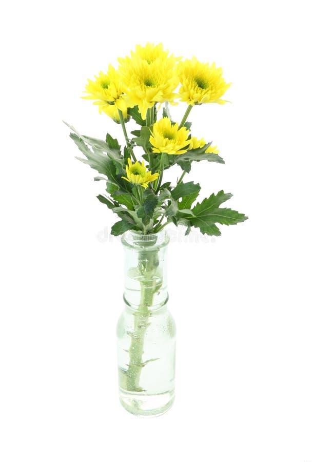 Żółty chryzantema kwiat w butelce zdjęcia stock