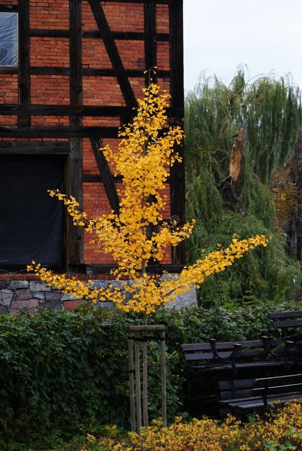 Żółty drzewo zdjęcie royalty free