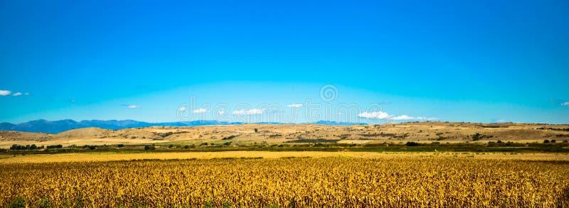 Żółty i błękitny piękno fotografia stock