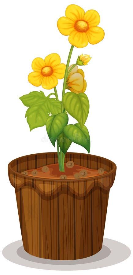 Żółty jaskier kwitnie w flowerpot ilustracja wektor
