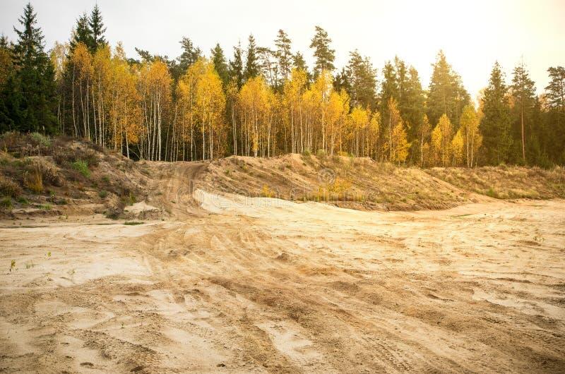 Żółty jesieni brzozy ulistnienie zdjęcia royalty free