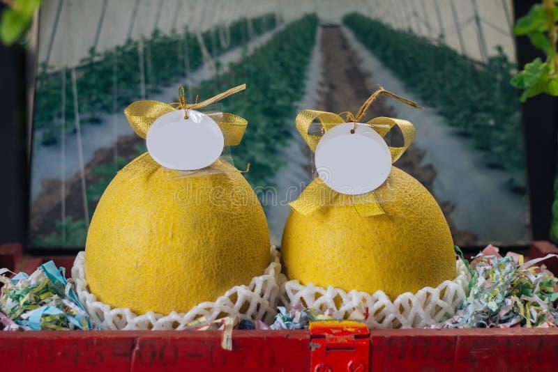 Żółty kantalupa melon zdjęcie stock