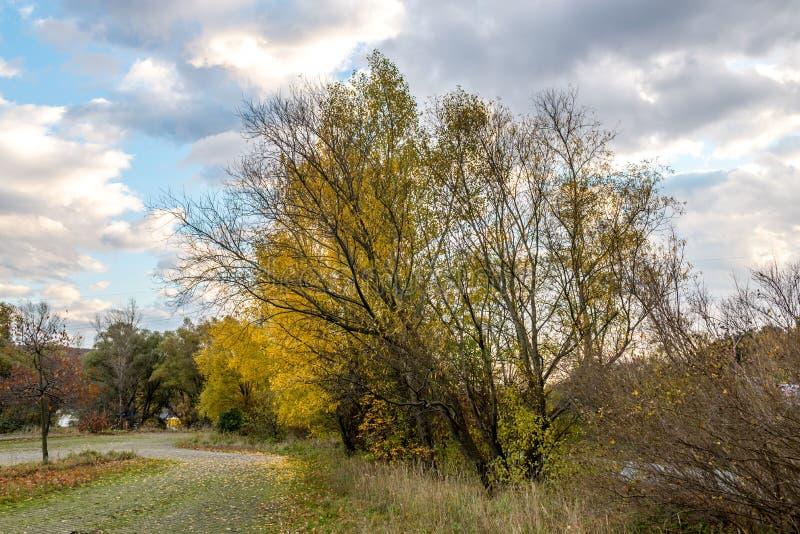 Żółty klonowy drzewo blisko parking jesieni zdjęcia royalty free