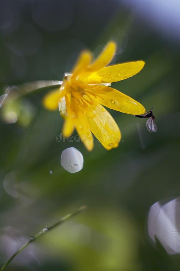 Żółty kwiat makro- zdjęcia royalty free