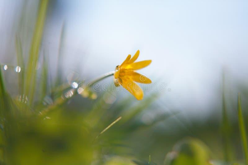 Żółty kwiat makro- obraz royalty free