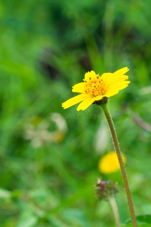 Żółty kwiat w ogródzie fotografia stock