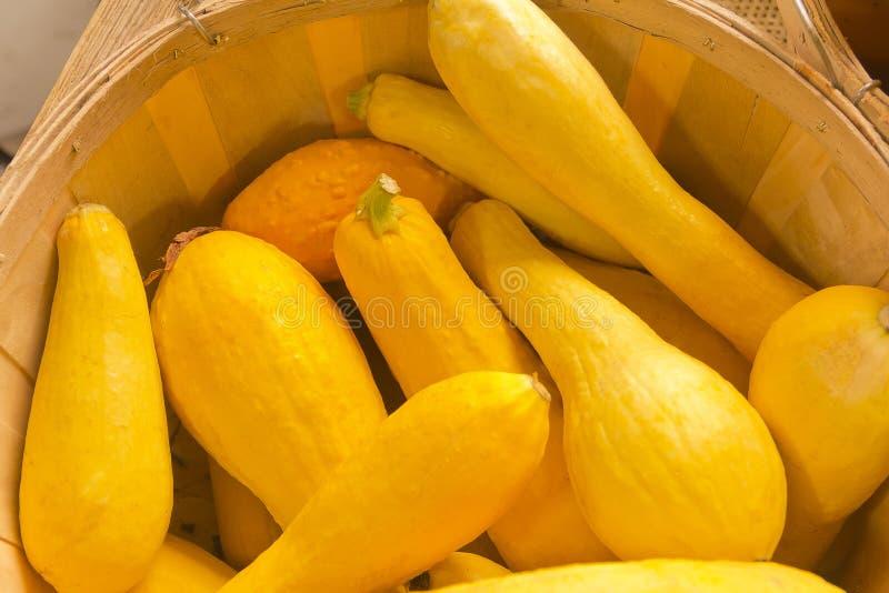 Żółty lato kabaczek obrazy stock